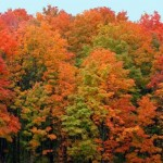 Follow The Fall Foliage