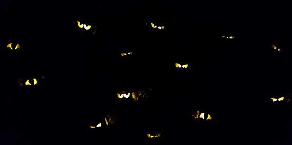 Spooky Eyes in Bushes